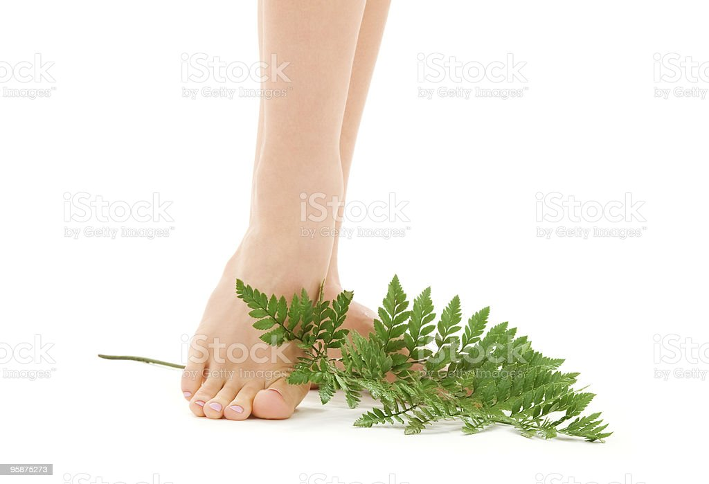female feet with green leaf royalty-free stock photo