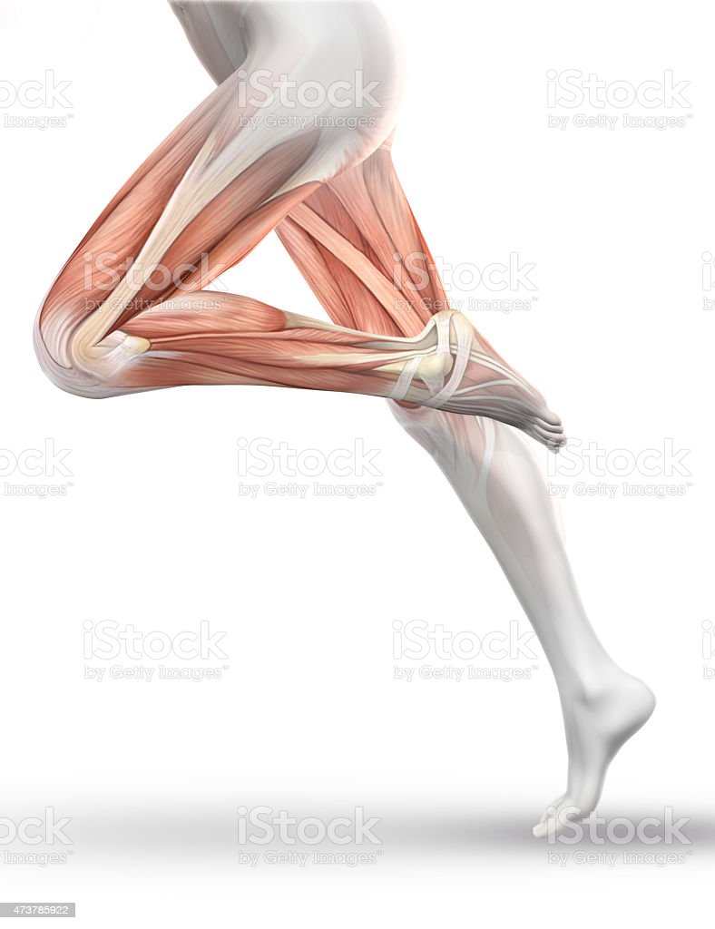 3d Female Figure Running With Partial Muscle Map Stock Photo More