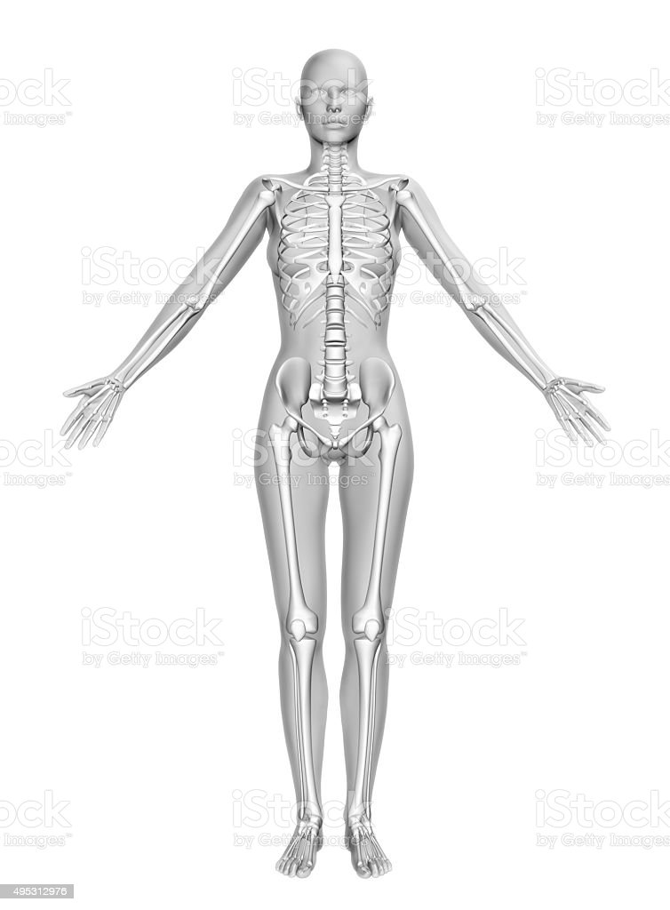 3d Female Figure With Smooth Skin And Skeleton Stock Photo & More ...