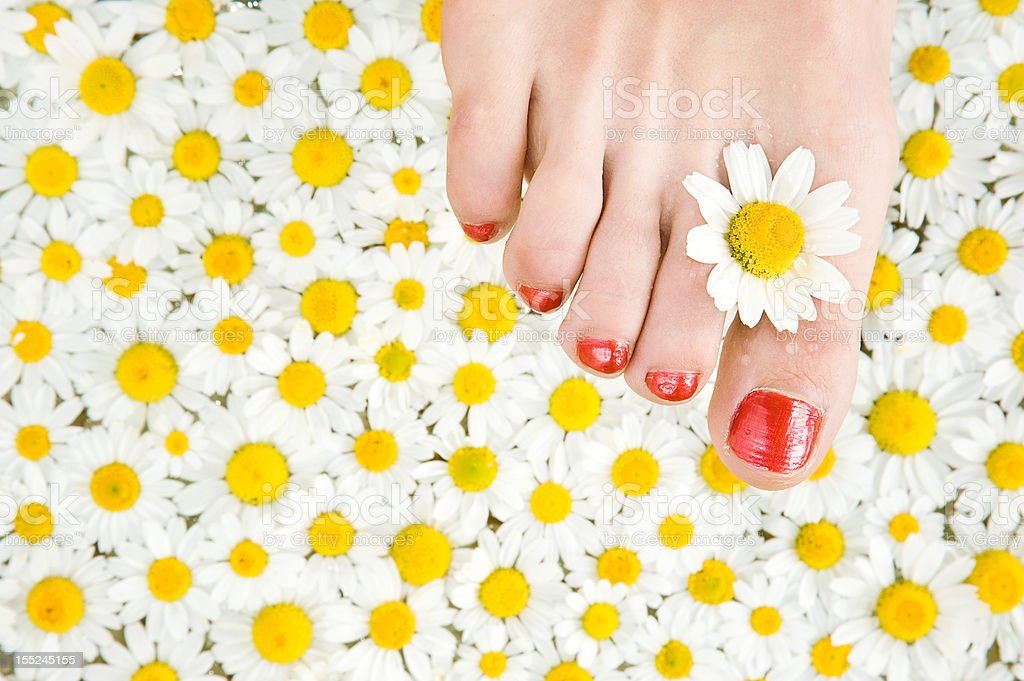 Female foot among camomile royalty-free stock photo