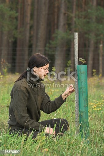 istock Female forester working planting a tree 176870592