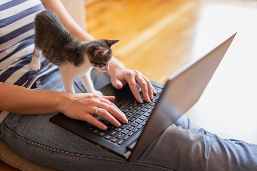 istock Female freelancer working from home 1167784406