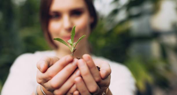 vrouwelijke tuinman handen met een plantgoed - herbebossing stockfoto's en -beelden