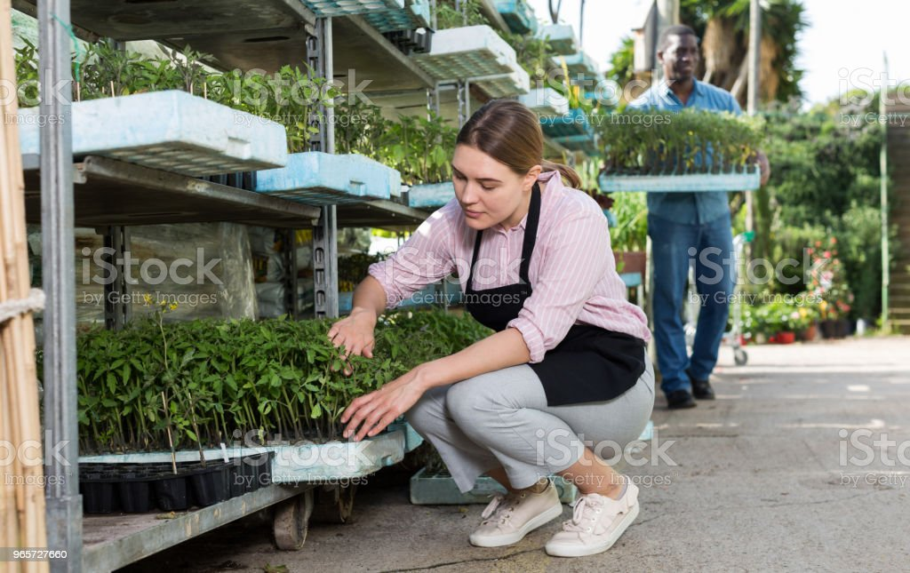 Female gardener working with seedlings - Royalty-free Activity Stock Photo