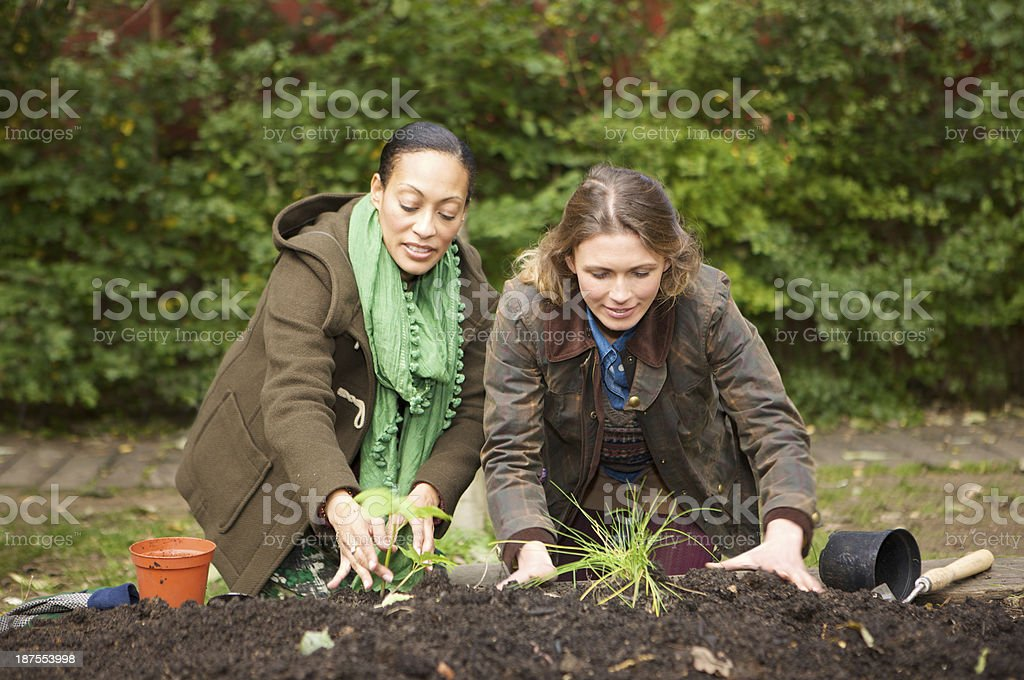 Female gardeners kneeling whilst planting in an urban vegetable garden royalty-free stock photo