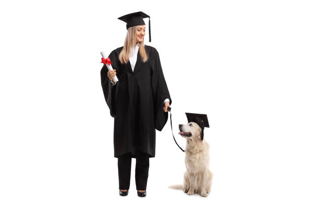 Dog Graduation Cap And Gown Stock Photos Pictures Royalty Free