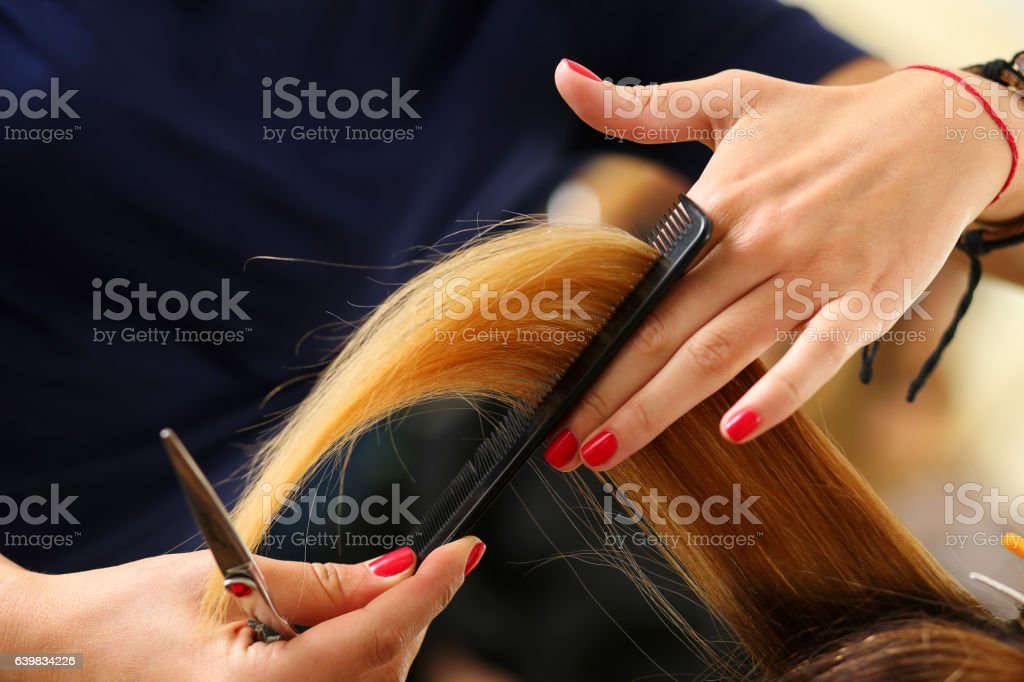 Female hairdresser hold in hand between fingers lock of hair stock photo