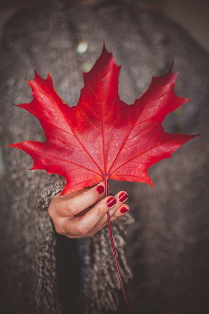 weibliche hand mit roten trockene blatt - herbst nagellack stock-fotos und bilder