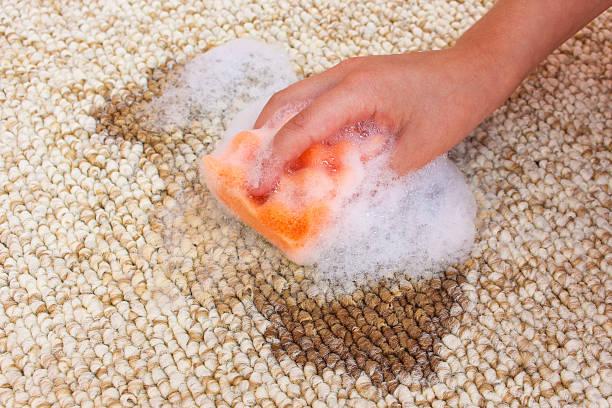 weibliche hand reinigen teppich mit schwamm und detergen - fleckenentferner stock-fotos und bilder