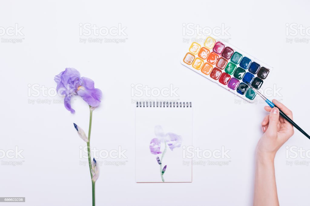 Female hand draws a blue flower in a notebook with watercolors royalty-free stock photo