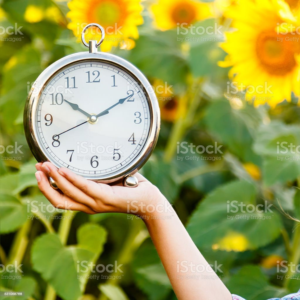 Female hand holding a watch on a sunflower field bacground. stock photo