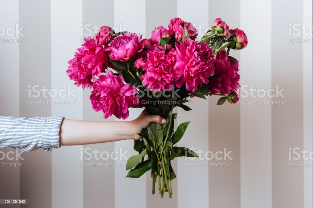 Female hand holding beautiful bouquet with fragrant peonies stock photo