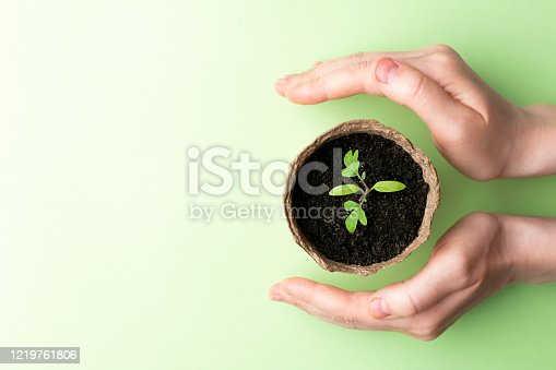 istock Female hand holding seedling in pot. Eco concept. 1219761806