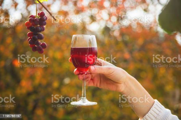 Female hand holds a glass of wine next to a bunch of grapes picture id1195785197?b=1&k=6&m=1195785197&s=612x612&h=1owuiy7hmsgdy82yfkkyhalyod55mviuxclrtimnqta=