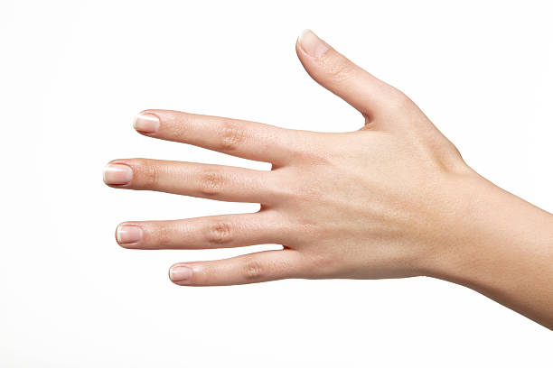 female hand is reaching out to shake hands stock photo
