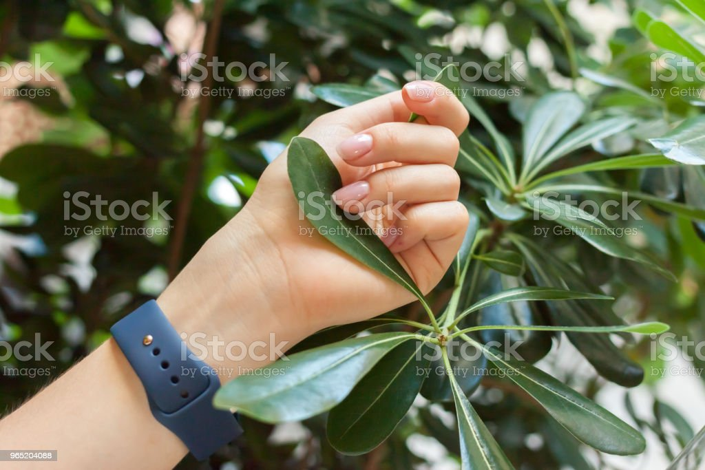 female hand keep green leaf royalty-free stock photo