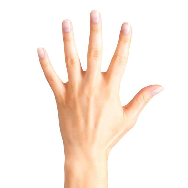 5 つの指と手のひらを示す女性の手 - 親指 ストックフォトと画像