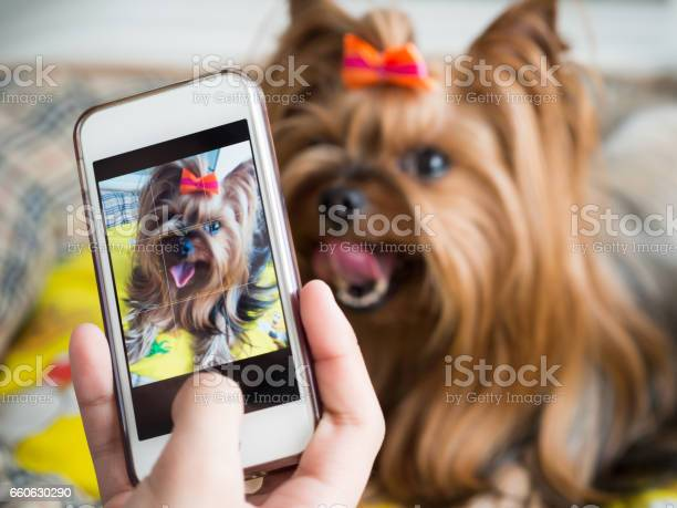 Female hand takes a small dog on the smartphone picture id660630290?b=1&k=6&m=660630290&s=612x612&h=qxxai2floetra5bu ikvzgm62vcwdwbcmn 53tpw2ky=