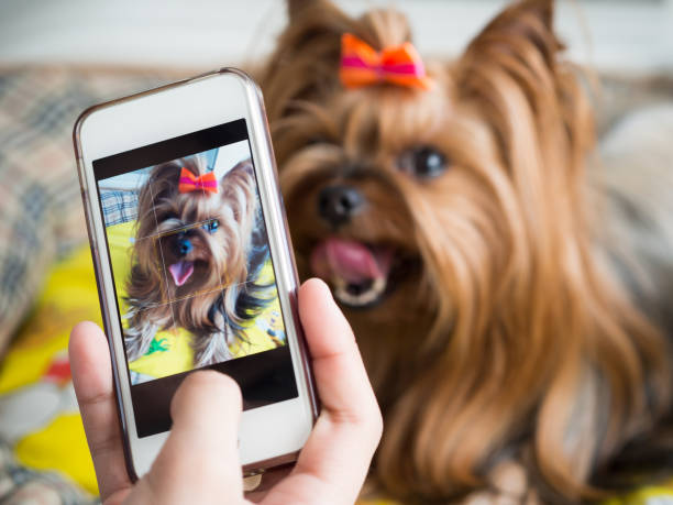 Female hand takes a small dog on the smartphone picture id660630290?b=1&k=6&m=660630290&s=612x612&w=0&h=wxthg416hfxotqmkirkia81xiidaffdudy0sxpqvzxy=