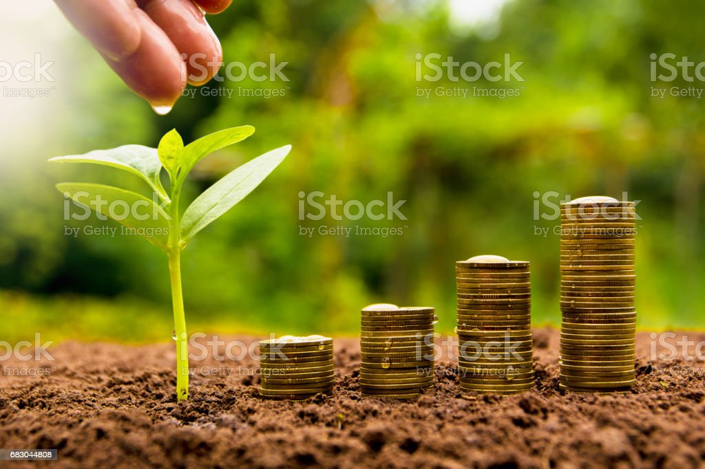 Female hand watering young plant with stack coin foto de stock royalty-free