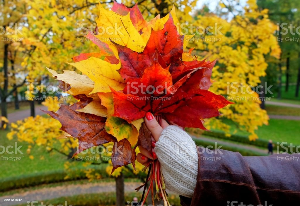 Female hand with colorful leaves. stock photo