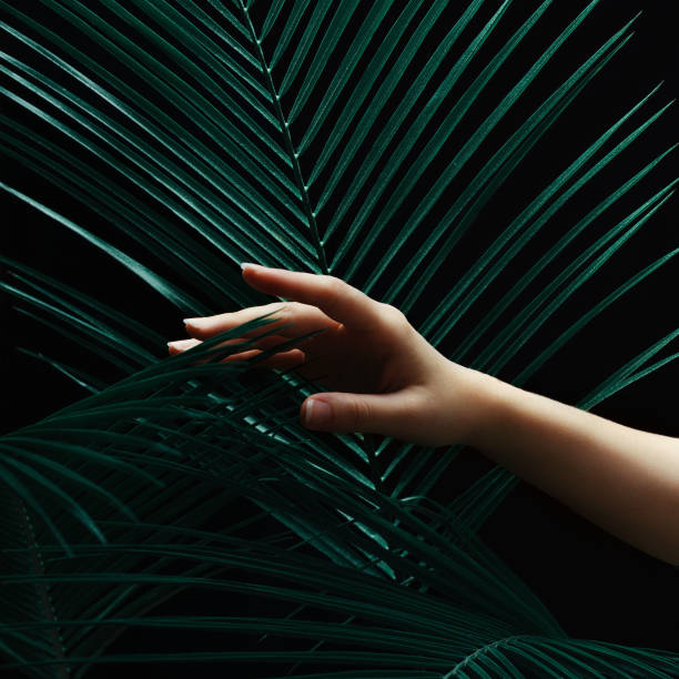 Female hand with palm leaves on a black dark background. Dark light, stylish beauty composition. stock photo
