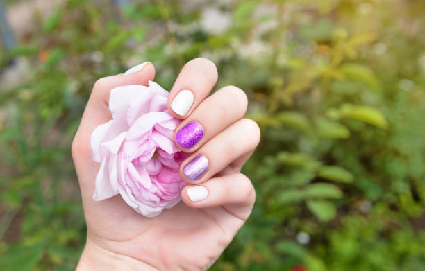 Female hand with purple nail design holding rose flower stock photo