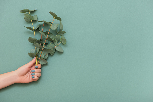 istock Female hand with trendy manicure and branches of eucalyptus on green background. 1184423181