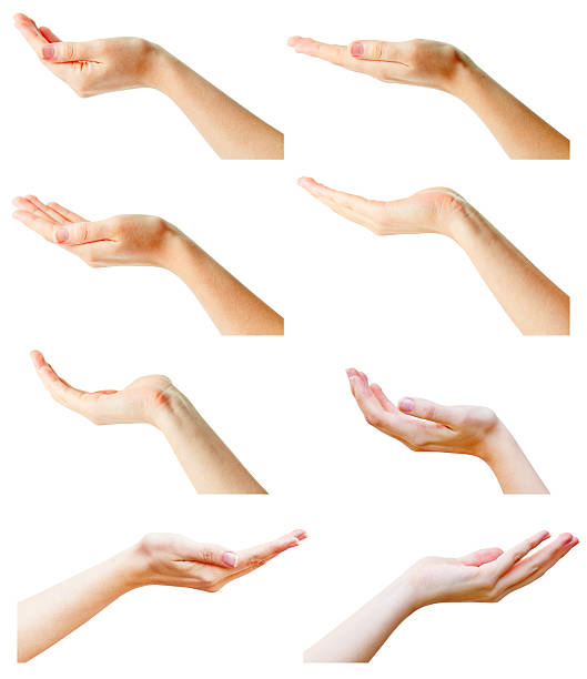 female hands collection female hands isolated on white hands cupped stock pictures, royalty-free photos & images