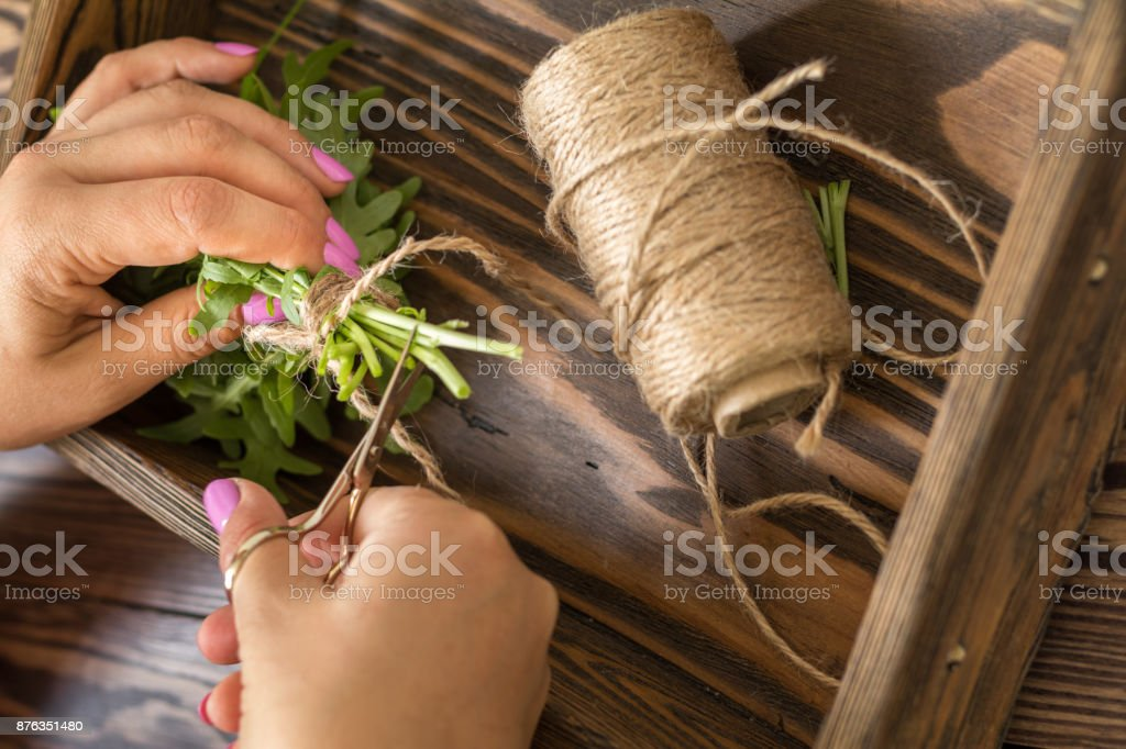 Female hands cutting arugula with scissors royalty-free stock photo