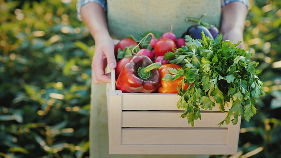 Female hands hold a box with fresh vegetables and herbs. Organic farm products