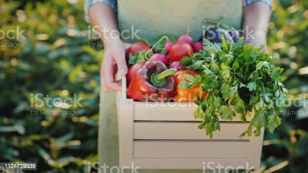 Female hands hold a box with fresh vegetables and herbs organic farm picture id1124729339?b=1&k=6&m=1124729339&s=612x612&h=dr3 txniefa6p k6wod5x7jukbxg2 ifqh3bg1wxqxq=