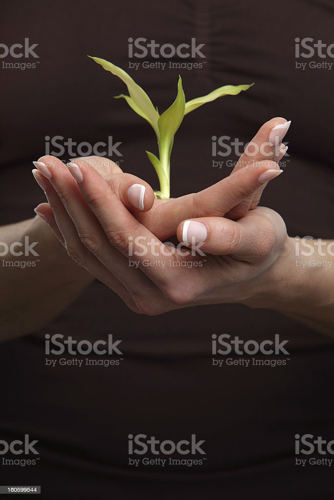 Female hands hold baby plant royalty-free stock photo