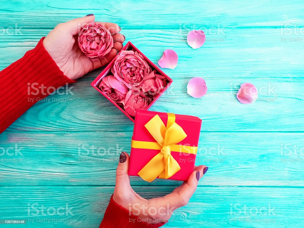 female hands hold gift box, rose flower on wooden background