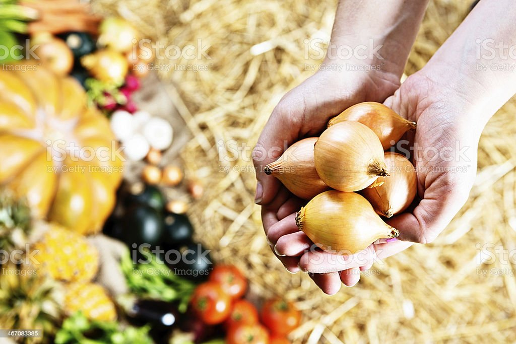 Female hands hold small pickling onons in farmers market royalty-free stock photo