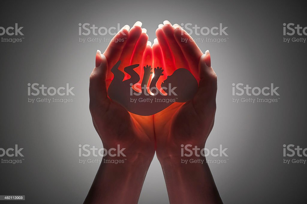 Female hands holding an embryo stock photo