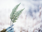 Female hands holding fern leaves in snowy weather