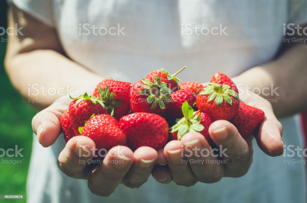 Female hands holding fresh strawberries stock photo