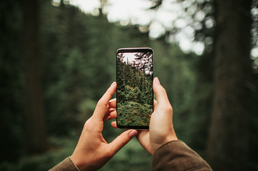 Female hands holding smartphone with photo of coniferous forest on display