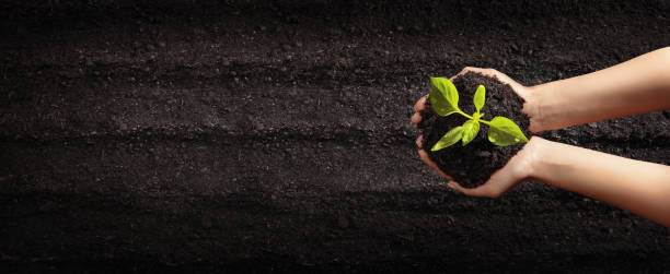 Female Hands Planting Young Plants. Garden Concept Female Hands Planting Young Plants. Gardening and Vegetable Garden Concept sapling stock pictures, royalty-free photos & images