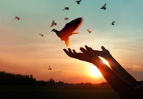 Female hands praying and free the birds to nature on sunset background, hope concept