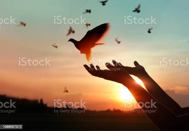 Female hands praying and free the birds to nature on sunset hope picture id1069557312?b=1&k=6&m=1069557312&s=612x612&h=lnpmokcudsprxqrb1lgn edeptaxh88gspojihzx1lm=