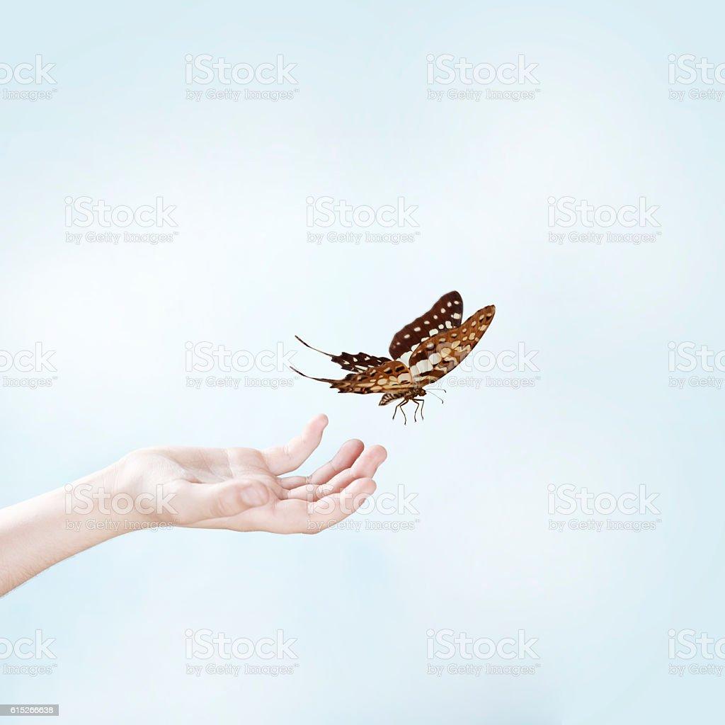 Female Hands Releasing Butterfly - foto de acervo