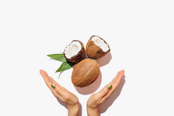 Female hands with green manicure hold open and whole coconuts stock photo