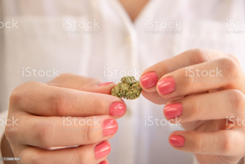 Female Hands With Pink Nail Polish Holding a Marijuana Bud. Cannabis Business Marketing. stock photo
