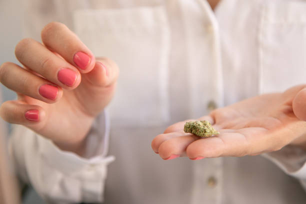 Female Hands With Pink Nail Polish Holding a Marijuana Bud. Cannabis Business Marketing. stock photo
