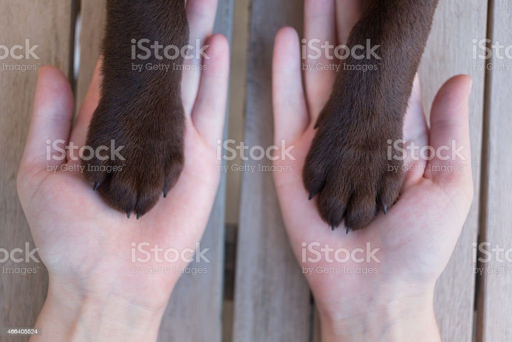 female hands with puppy paw´s, very selective focus