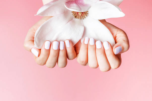 Female hands with white manicure holds magnolia flower on a pink background close-up. stock photo