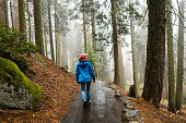 Female hiker enjoying the fresh morning hike through a misty wet forest