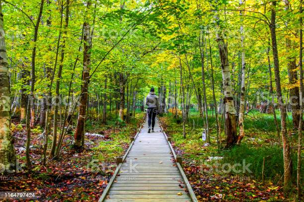 Photo of Female hiker on Jesup Trail in the Autumn